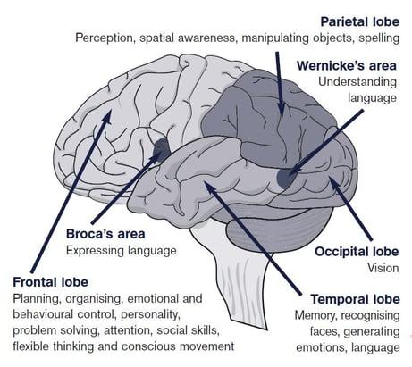 cerebralcortex